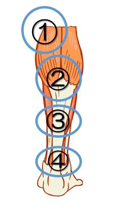 上から ①膝裏の内側 ②ふくらはぎの一番盛り上がっている部分 ③そこからやや下の部分 ④アキレス腱